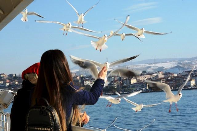 اسطنبول sfari_4ec4777466a697